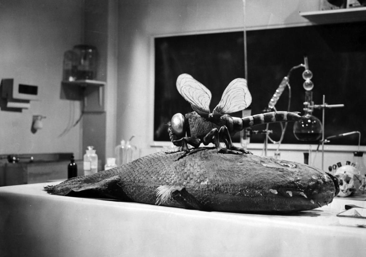 """Potwór na kampusie"" (1958), reż. Jack Arnold"