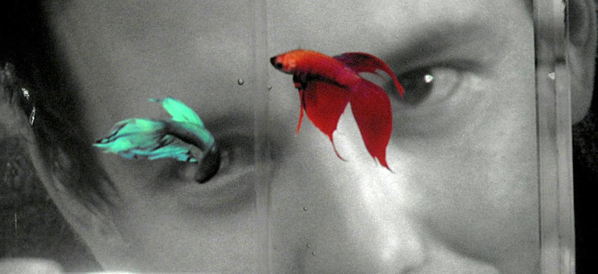 "Recenzja filmu ""Rumble Fish"" (1983), reż. Francis Ford Coppola"